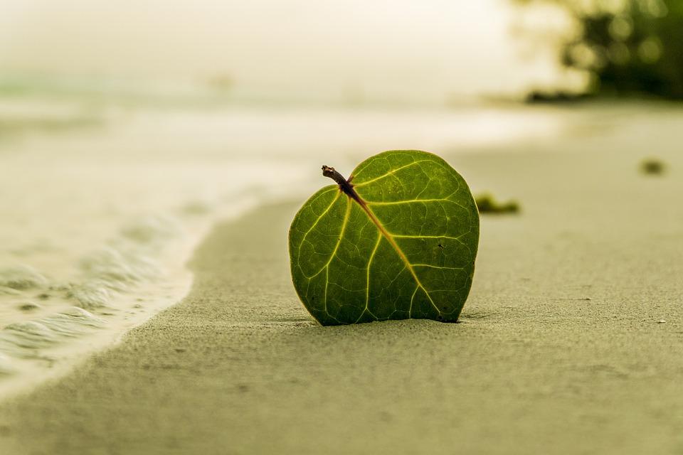 Sākas dabas skaitīšanas pēdējā sezona