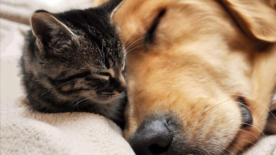 """Dzīvniekus adoptēt atkal var. Patversmē """"Lauvas sirds"""" atrodas 15 suņi un 11 kaķi"""