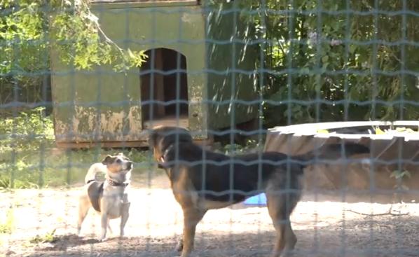 Dzīvnieku aizsardzības biedrības spiedīs reģistrēties kā patversmēm