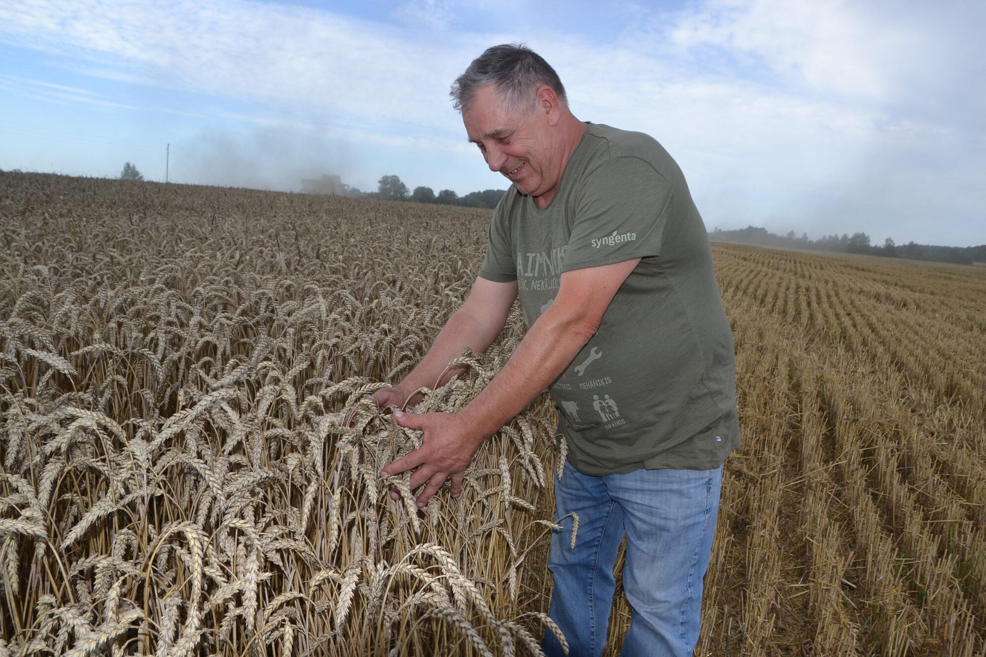 """Lauksaimnieks: """"Ir bijis labāk. Bet raža nav slikta"""""""
