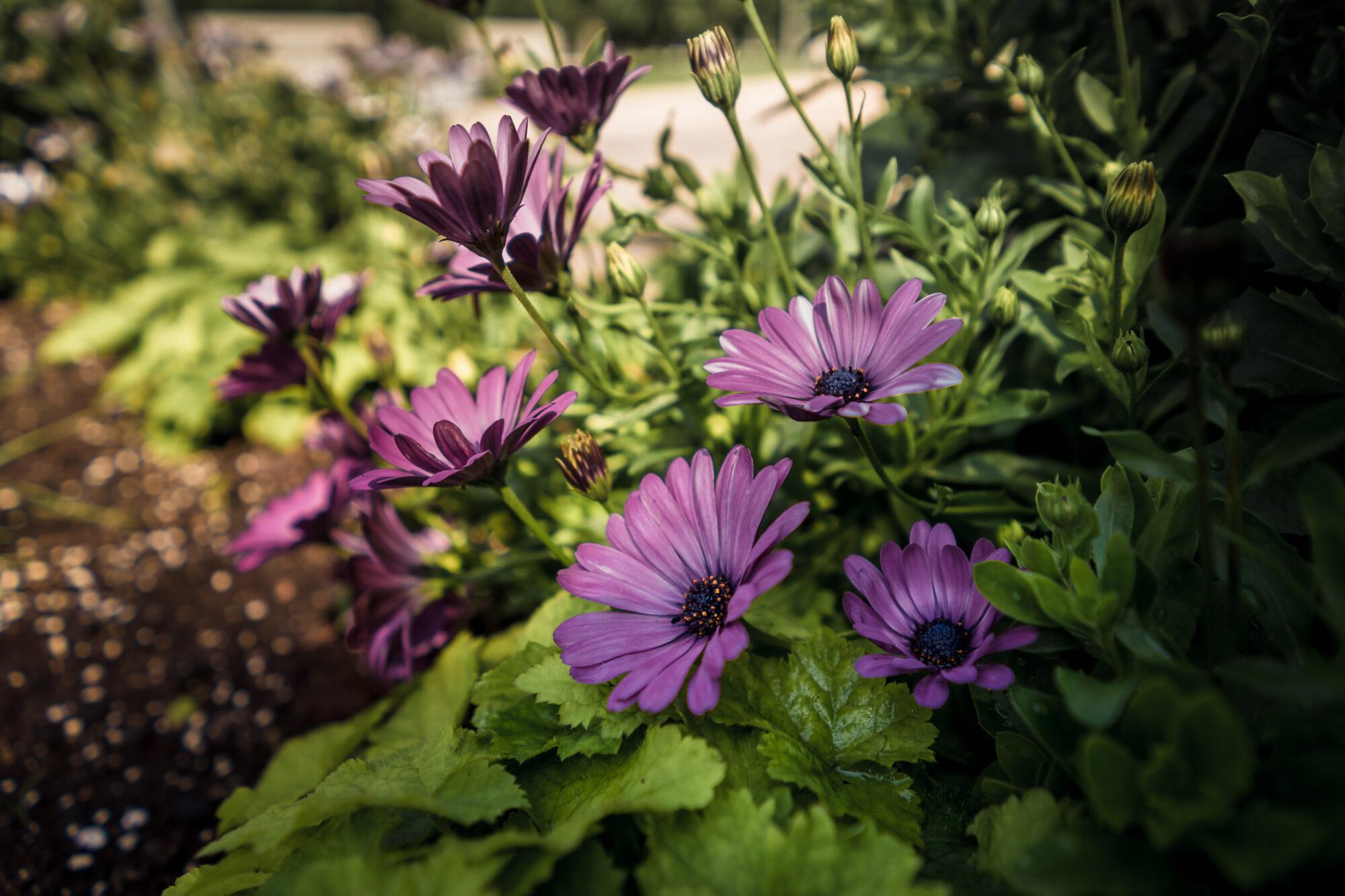 Aicina novērtēt sakoptākos Liepājas namus un skaistākos dārzus