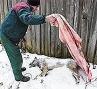 Turpinās skatīt lietu par nežēlīgu suņa nogalināšanu