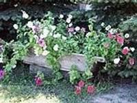 Nīca dižojas ar skaistajiem dārziem