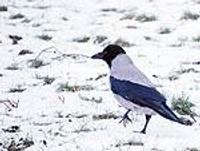 Kailsals apskādējis ziemājus