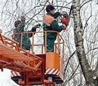 Siļķu ielā veido koku vainagus