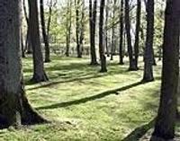 Koki atgūst zaļo spēku un skaistumu