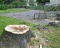 Nocērt kokus, lai būvētu ēku