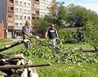 Koki upurēti jaunā dzīvojamā rajona būvniecībai