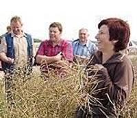 Durbes graudaudzētāji klausās, kā kviešu laukā nauda skan