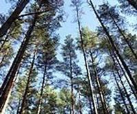 Par meža ugunsnedrošā laikposma izsludināšanu