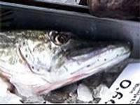 Notiek šogad pirmais zivju tirdziņš