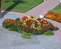 Sāk uzstādīt puķu skulptūras un ziedu grozus