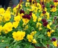 Liepājniekiem patīk ziedi