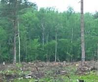 Vai koki glābs Latvijas ekonomiku?