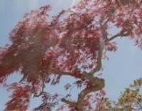 Japāņu dārzs Žemaitijas pakalnā