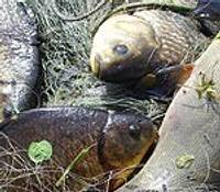 Pārkāpjot kārtību, maluzvejnieki gādā sev iztiku