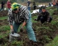 Bezdarbnieki kartupeļus audzēs arī nākamgad