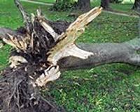 Papildināts – Vētra nogāž vairākus kokus un laternas stabus; piestātnē sabojā kuģi