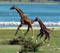 Viena maza daļiņa Āfrikas