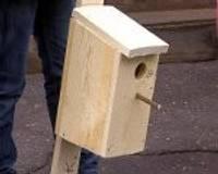 Skolēni sanaglo putnu būrīšus strazdiem