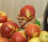 Latvijas ābolu kādam laikam vēl pietiks