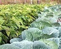 Apstiprina teritorijas ģimenes dārziņu ierīkošanai un apsaimniekošanai