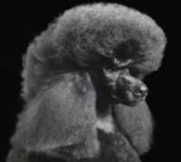 Liepājā izveidota pirmā suņu un kaķu frizētava