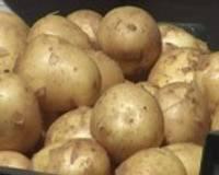 Grobiņas novadā novāks kartupeļu ražu trūcīgajiem liepājniekiem
