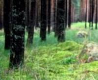 Maksās par mežu