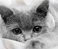 """TC """"baata"""" notiks šķirnes kaķu izstāde"""