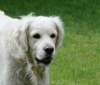 Sākas labdarības akcija bērnu ārstēšanai ar suņu terapiju