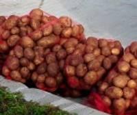 Dalīs kartupeļus trūcīgajiem un maznodrošinātajiem iedzīvotājiem