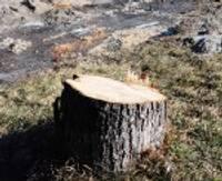 Komisija izskatījusi vairākus lēmumus par koku zāģēšanu