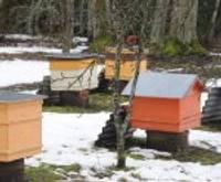 Biškopji saņems subsīdijas