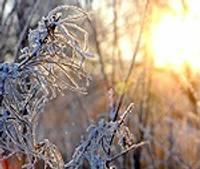 Rucavā naktī uzsniguši pieci centimetri sniega