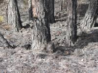Papildināts – Dienvidkurzemes mežos saglabājas augsts ugunsbīstamības risks; ugunsnovērošanas torņos trūkst dežurantu