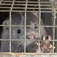 Lūdz sākt kriminālprocesu par cietsirdību pret dzīvniekiem; policija gaida PVD slēdzienu