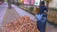 Zaļos atkritumus var nogādāt uz šķirošanas laukumu vai atkritumu poligonu