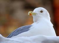 Atsvabina šahtā iesprūdušu putnu