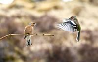 Aicina aplūkot foto ar putniem