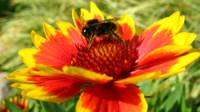 Biškopji pretendē uz balvām