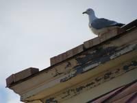 Atbrīvo ventilācijas šahtā iesprūdušu putnu