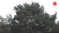 Vējš ar ātrumu 28 metri sekundē gāž kokus un pieturas