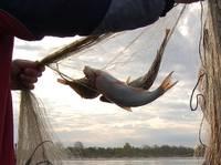 Durbes ezerā uziet nelegālas zvejas ierīces; uzbrauc stāvošai automašīnai