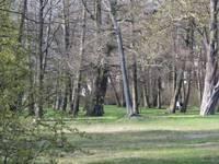 Latvijas simtgadei par godu uzlabos parka dendroloģisko vērtību