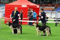 "Suņi ""Daugavas"" stadionā"