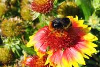 Aizvadītajā ziemā iet bojā liela daļa bišu saimju