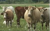 VDI uzmanības degpunktā – augkopības un lopkopības nozare