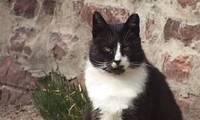 Liepājā turpina bezsaimnieku kaķu sterilizācijas programmu