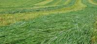 Apgāžoties zāles pļaušanas traktoram, Durbes novadā iet bojā vīrietis